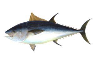 Comerías un lince ibérico mariño?