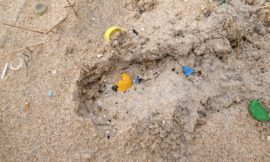 Primeiro estudo da distribución de microplásticos en Galiza