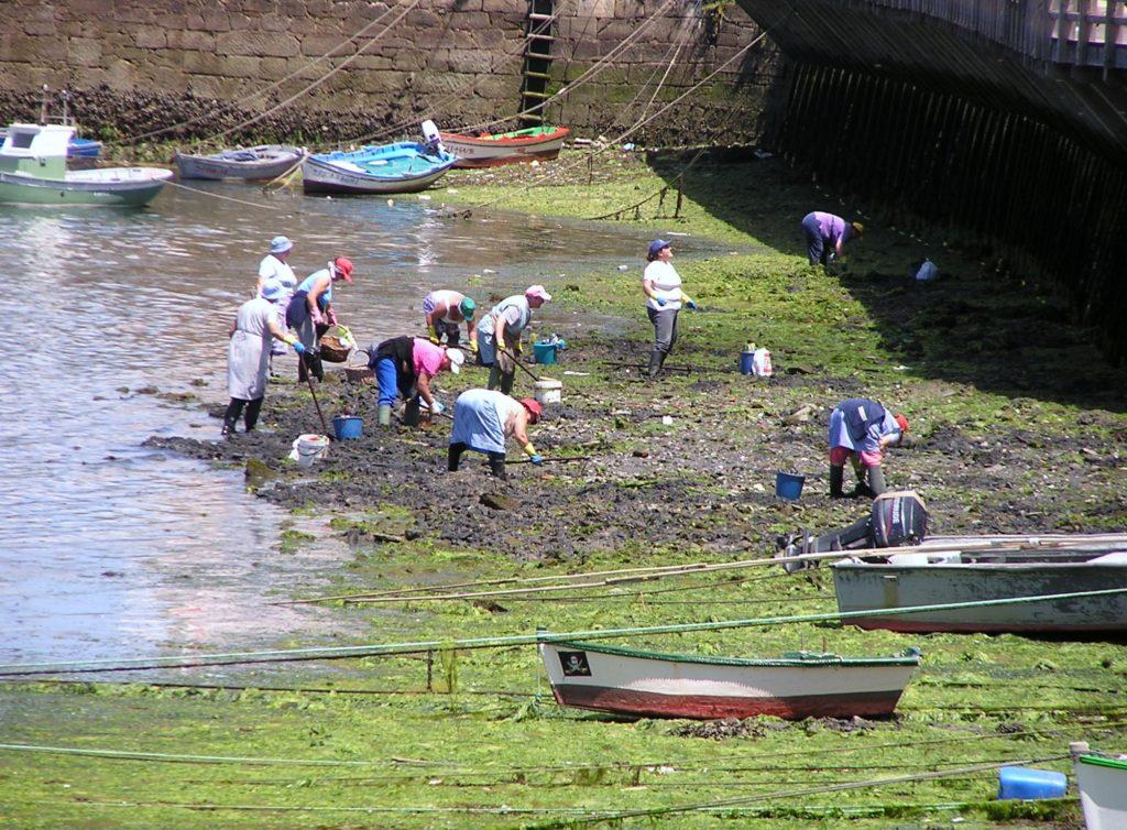 Mariscadoras en Mugardos
