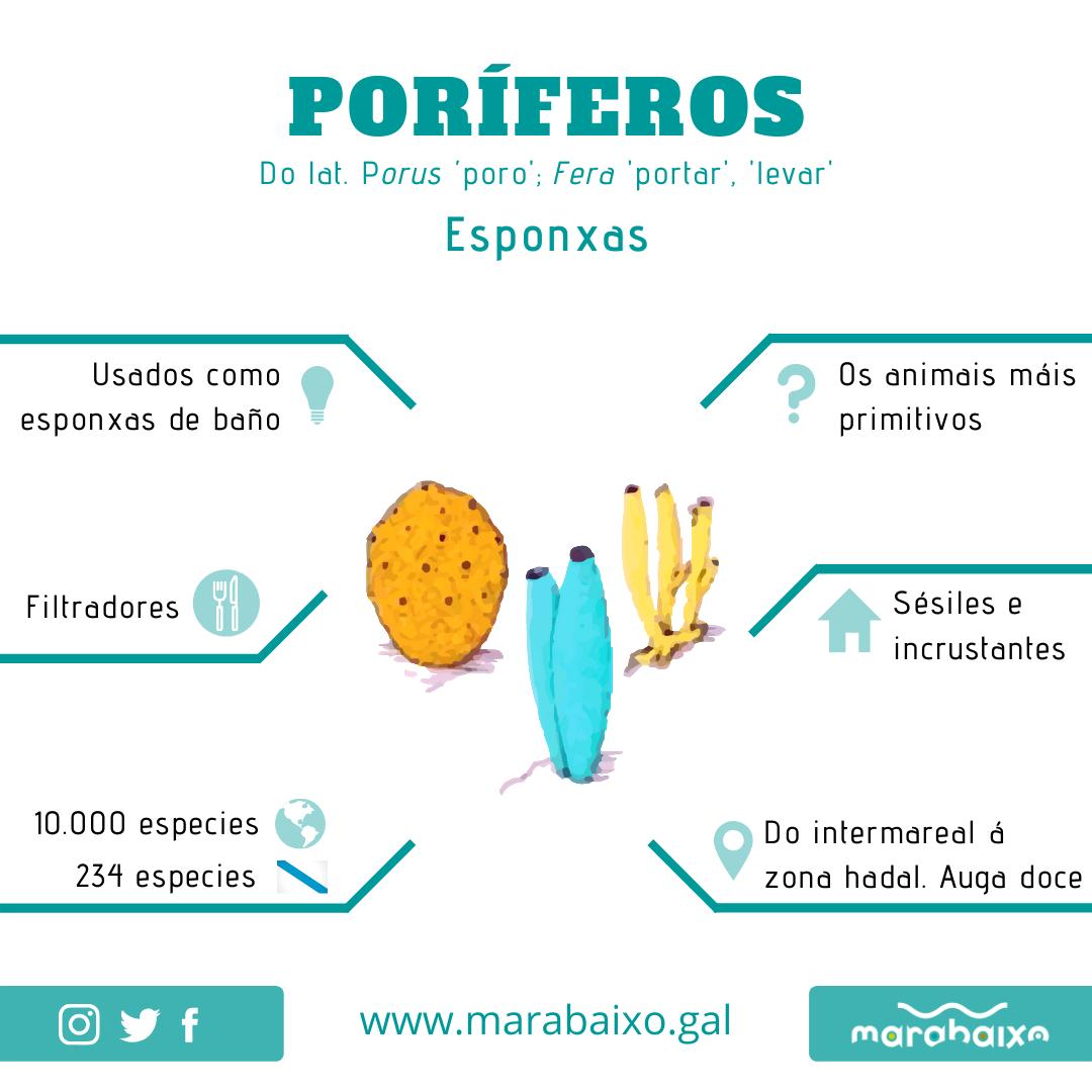 Infografia Poríferos