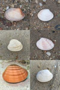 Cales son as diferencias entre os 6 tipos de ameixas