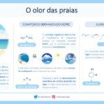 A química do cheiro do mar