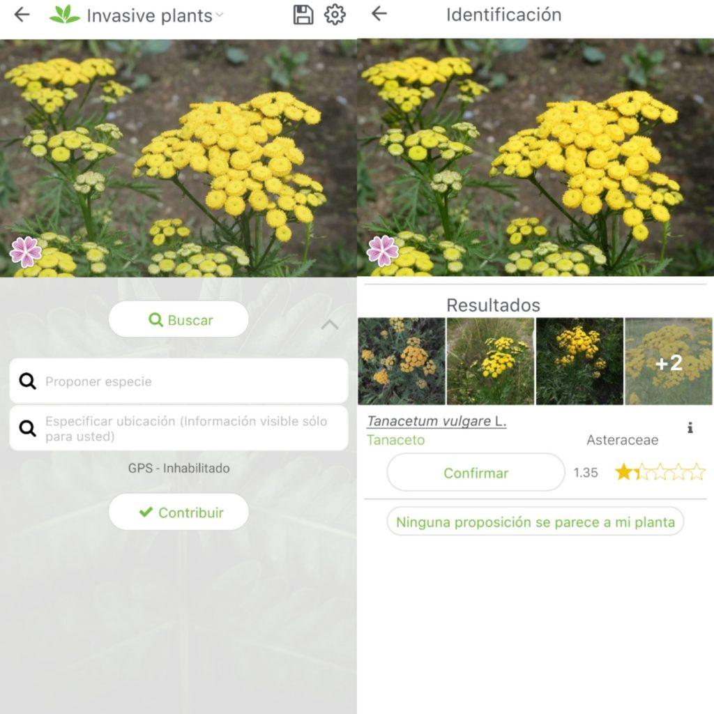 Pantalla de busca e identificación en PlantNet