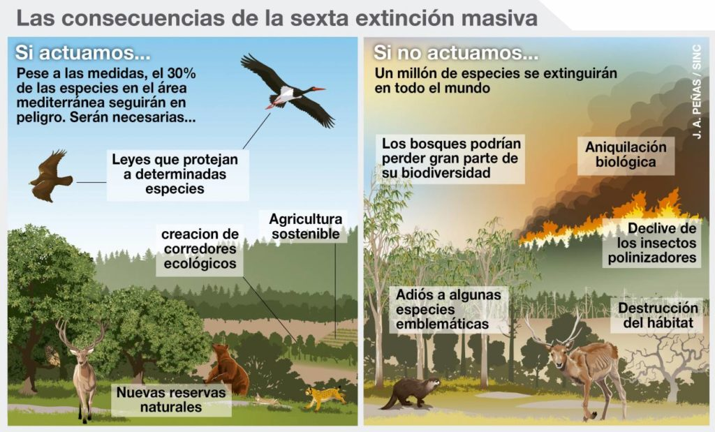 Consecuencias da sexta extincion masiva. Fonte: agenciasicnc
