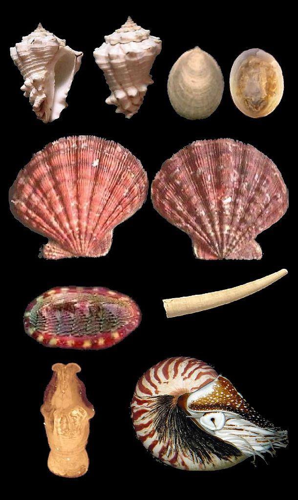 Diversidade de moluscos. Fonte: es.wikipedia.org